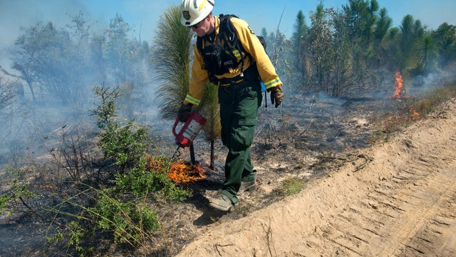 David Smith, forestry operations manager at Blackwater State Forest, sets a backfire on a prescribed burn in in Holt. Smith was recently selected as the Florida Forest Service's resource manager of the year. Smith helps manage Blackwater River State Forest and one of the reasons he won the award was because of the prescribed burn program at Blackwater.