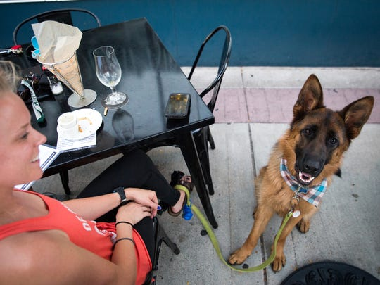 Ky, a 1.5-year-old German Shepherd, owned by Kaitlyn Trestrail of Berkley, are taken in the sights and food at Jolly Pumpkin in Royal Oak on Thursday, July 19, 2018.
