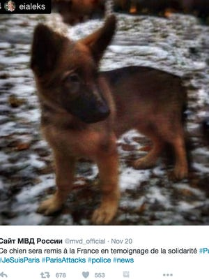 "The Russian government is sending a puppy to France in honor of a police dog named ""Diesel"" that was killed during an anti-terror raid in Paris last week."