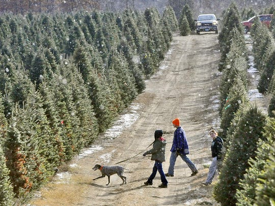 This year proper Christmas tree disposal is especially important, as the Minnesota Department of Agriculture warns of an invasive pest that could hitchhike into Minnesotan farms via trees shipped from other states.