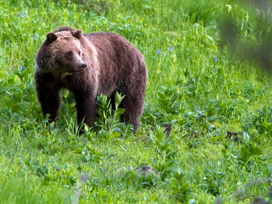 -Hunting Grizzlies.jpg_20121204.jpg