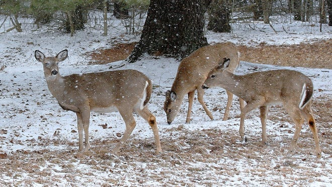 Chemung County will once again allow a handful of disabled hunters to bow hunt for deer at Park Station this fall.