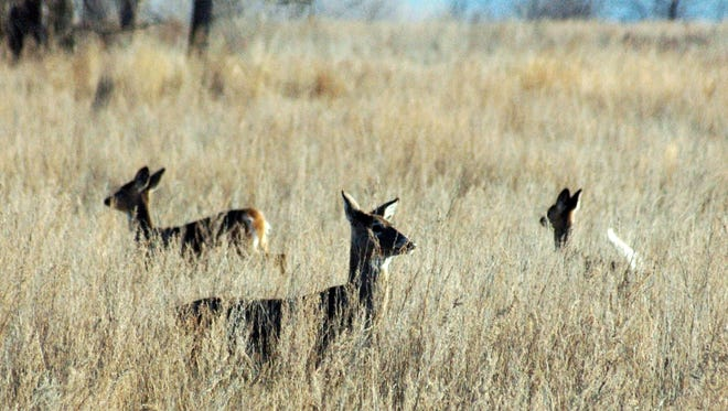 File photo of deer in the field.