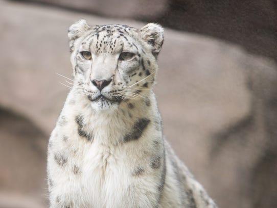 Autumn Shoemaker-leopard-ugc.jpg