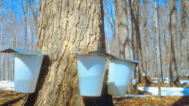 Syrup containers on a tree