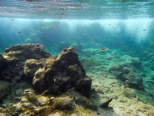 Imagen submarina del arroyo natural de Fossil Creek,