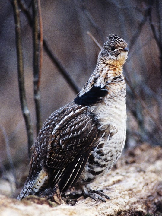 WSF-1021-outdoor-grouse.jpg
