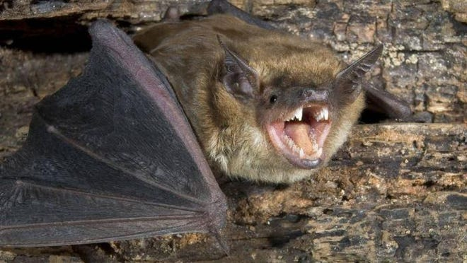 Two bats have tested positive for rabies in Stephenson County.