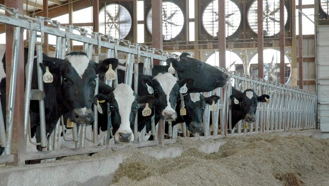 Cooling dry cows offers multiple benefits for the cow, her daughters and her owners.