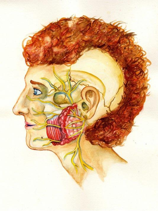 LLW Facial Nerves
