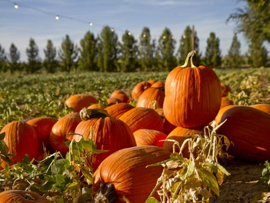 Schnepf Farms pumpkins