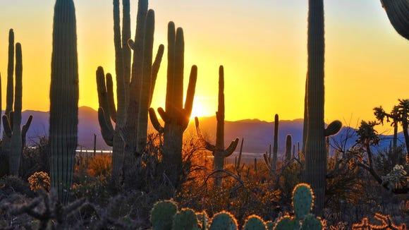 Sunset at Saguaro National Park near Tucson Arizona. Credit: Thinkstock/Getty Images