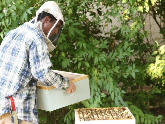 Pat Harrison of HarBee Beekeeping opens a beehive in