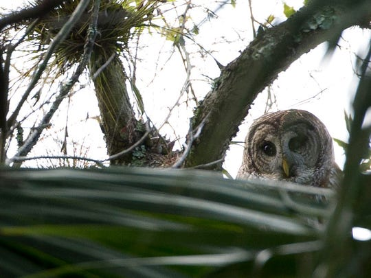 Look and listen for owls during the Oxbow Eco-Center's Owl Prowl.