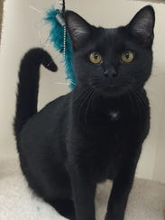 Anderson is a 7-month-old black cat who has personality