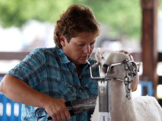 Donna Mann of Pennsylvania trims 'Saphira' to get ready for judging at the annual Sussex County Farm and Horse show. August 6, 2016, Augusta, NJ