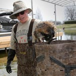 Okauchee Lake has a serious muskrat problem. A retired trapper is trying to solve it.