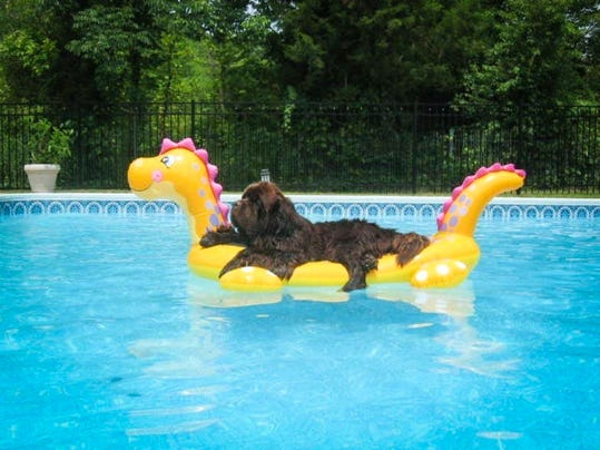 "This photo of Abbey relaxing on a pool float was submitted to the Lebanon Daily News by Troy Reed for our Community Journalism photo collection this summer. This photo's theme was ""Dog Days of Summer."""
