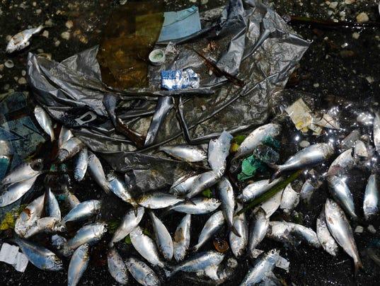 2015-2-24-dead-fish-rio-bay
