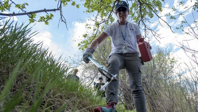 Fort Collins volunteer program manager Charlotte Norville carefully picks up a syringe found by a volunteer and drops it in a hazardous waste container on Thursday, May 10, 2018, along the Poudre River in Fort Collins, Colo. A group of Otterbox employees volunteered to clean up along the banks of the Poudre from Lee Martinez Park to the Fort Collins Museum of Discovery.