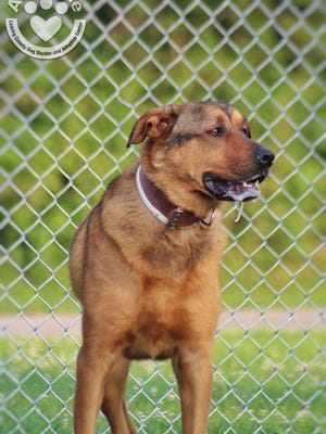 Renee is available at the Licking County Dog Shelter and Adoption Center