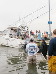 The Fishful Thinking brings in the 644.9-pound shark