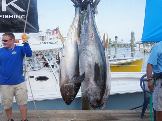 Top Dog's catch of yellowfin, totalling 152 pounds