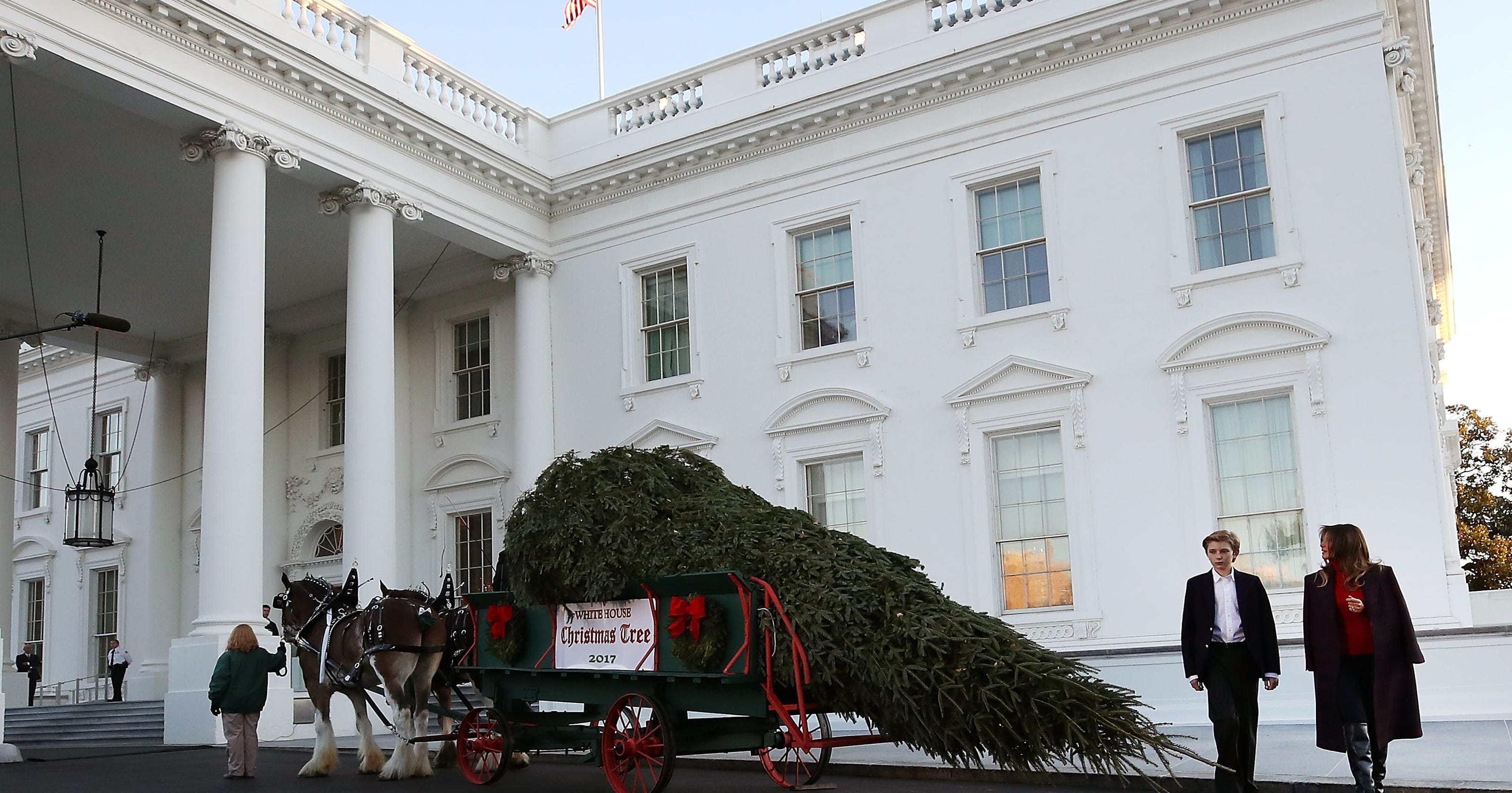 the trump white house christmas tree now on display