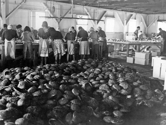 Abalone Cannery circa 1938.jpg