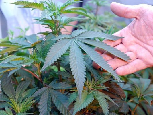 medical marijuana AP
