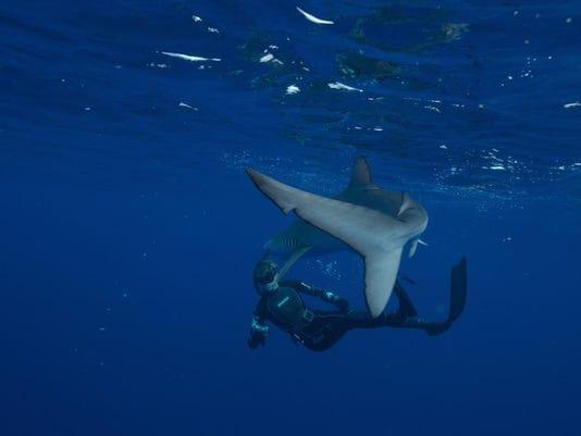 shark_5.jpg