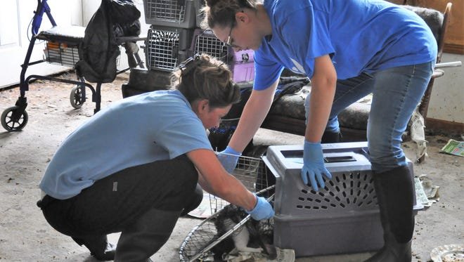 Two animal welfare workers place a cat in a crate on May 31 at an Oconto County home where more than 60 cats were found in poor condition.