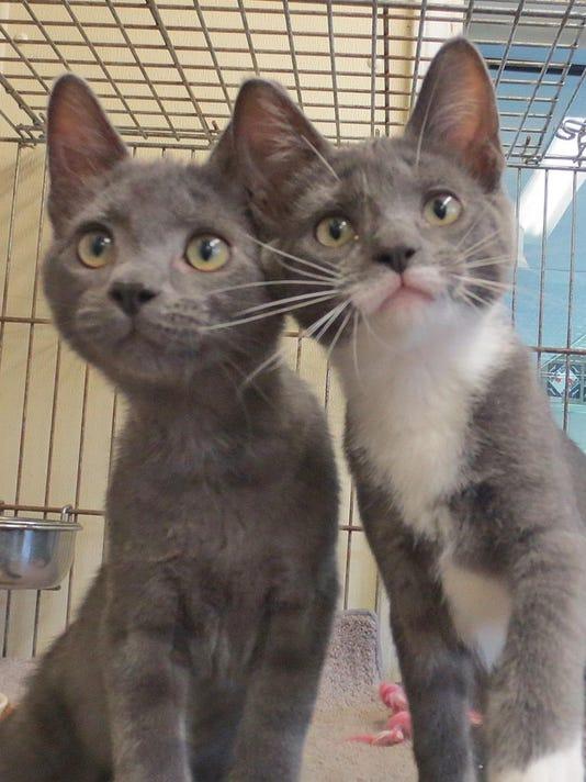 20150823_bradford_pets_cats.jpg