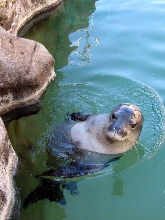 Hawaiian monk seals.jpg