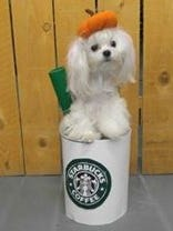 """Mabel as a """"Pumpkin Spice Latte"""" is one of the submissions for this year's Better Life Natural Pet Foods Halloween Costume Contest."""
