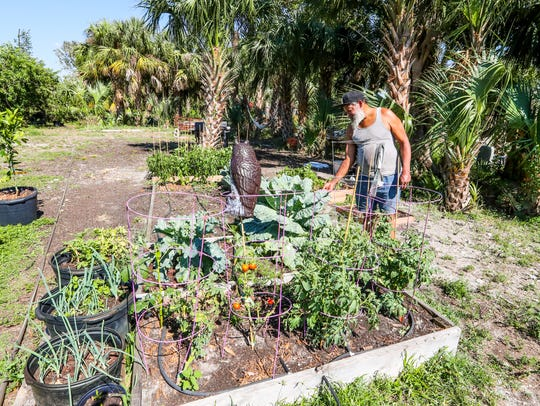 Derek Davis came to Lazy Man's Garden last year for herbs for his wife. Now his Fort Myers garden has turned into multiple backyard beds overflowing with collards, tomatoes and bell peppers.