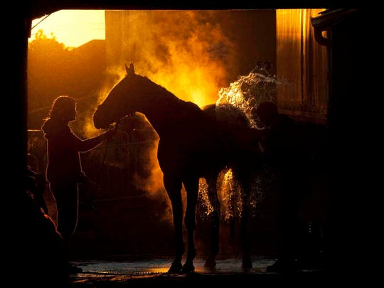In this photo provided by Woodbine Racetrack, a thoroughbred is washed as the sun rises after an early morning workout at Woodbine racetrack in Toronto, Tuesday, Sept. 16, 2014. (AP Photo/Woodbine Race Track, Michael Burns Jr., via The Canadian Press)