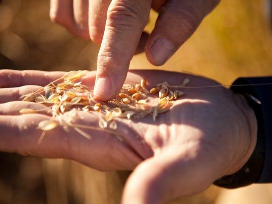 Grains in Hand