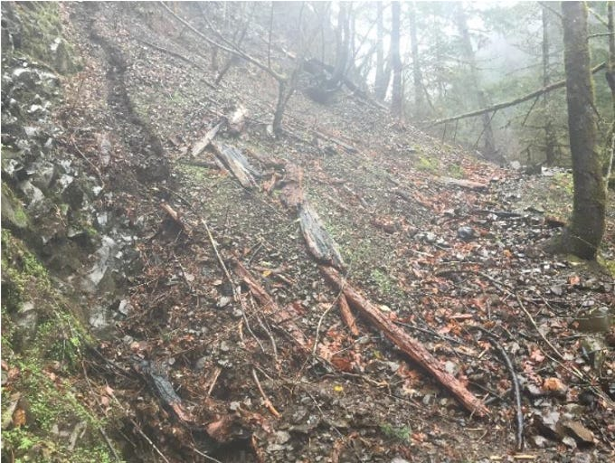 Fire damage to Wahclella Falls Trail in the Columbia