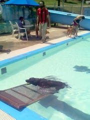 A ramp helped dogs of all sizes and ages exit the pool.