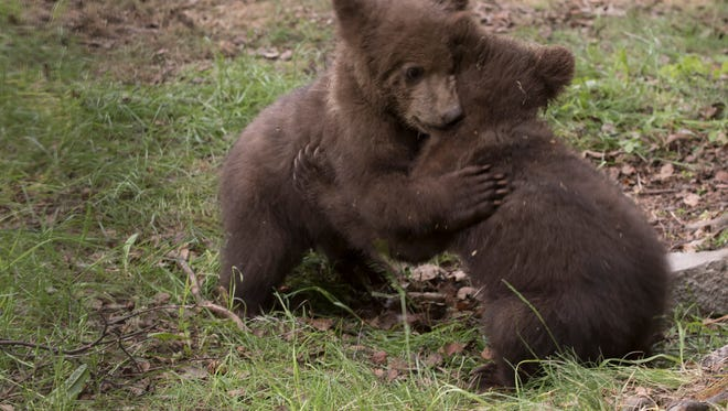 The final six bear names for the two male Kodiak bear cubs was announced Tuesday and voting last until Oct. 21.