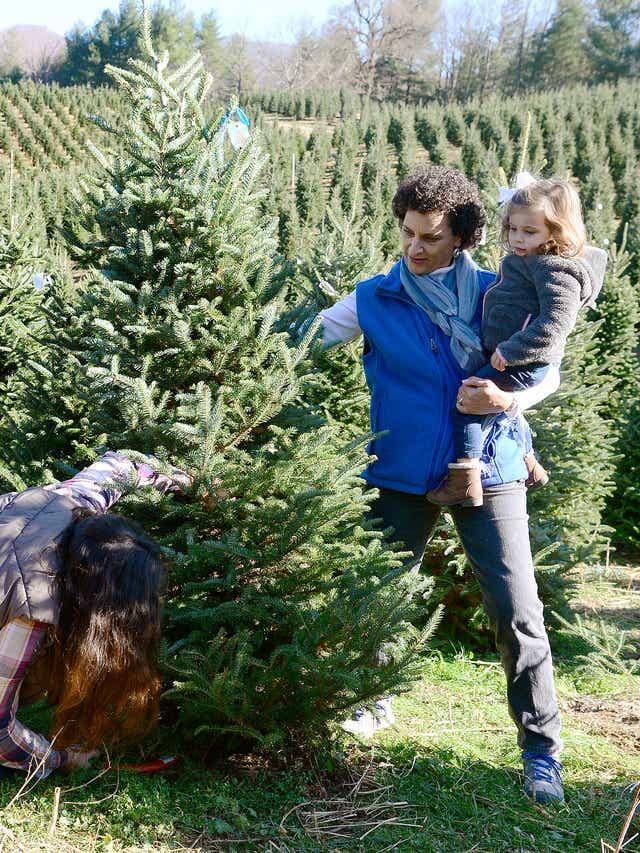 Christmas Tree Farm Asheville Nc.Christmas Tree Farm About More Than A Tree