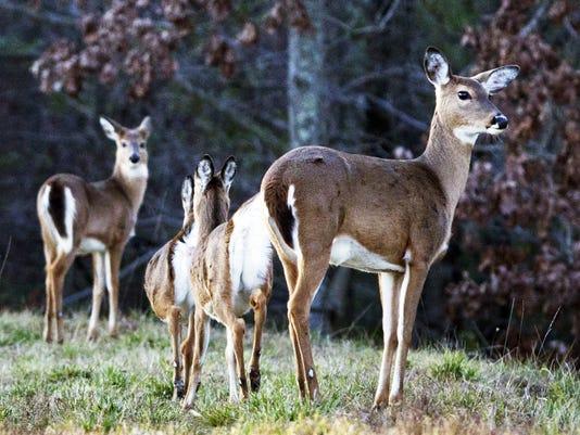 636286424449570576-deer-photo.jpg