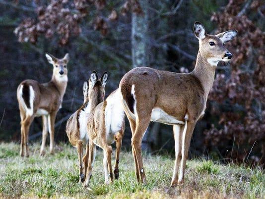 635816275584754702-deer-photo