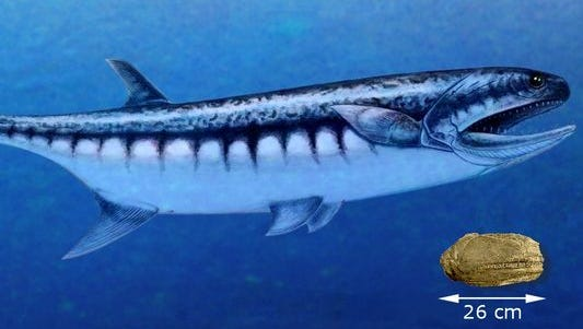 The Birgeria americana predates Nevada's most famous fossil, the Ichthyosaur, by more than 30 million years.