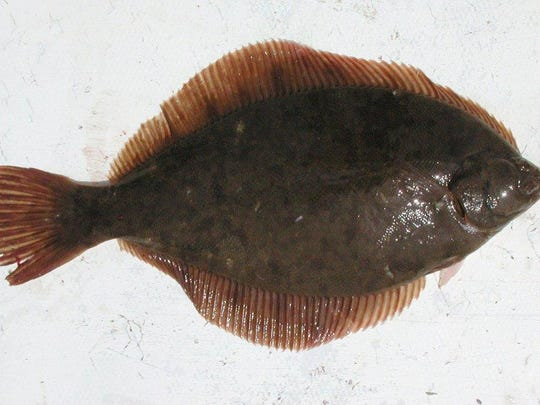 March to May is winter flounder season in the bays and rivers.