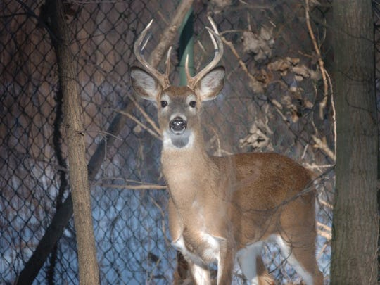 Borough officials in Saddle River seem intent on moving forward with a deer hunt.