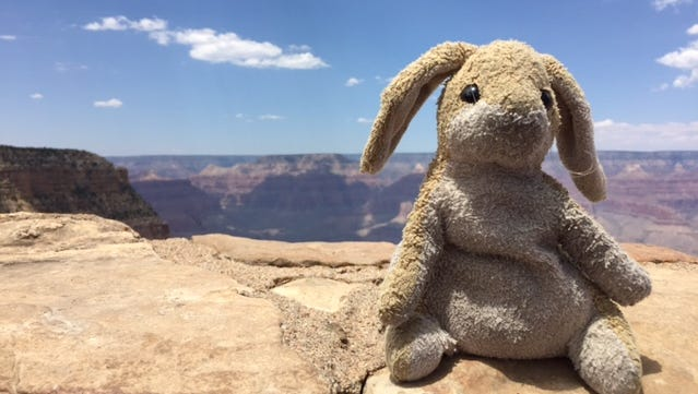 It's Take-Your-Bunny-To-A-National-Park Day!