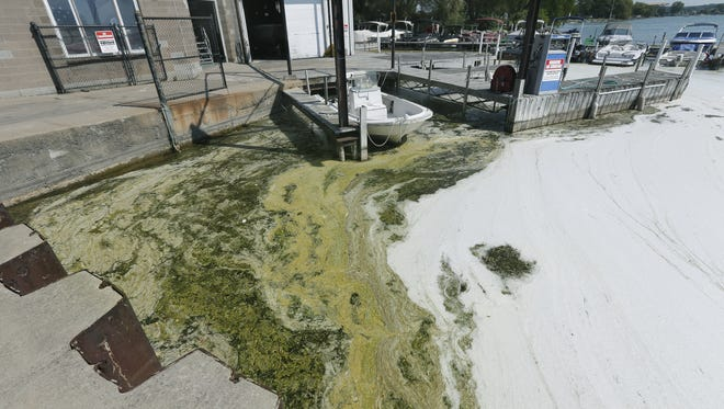 Blue-green algae and white foam along the Canandaigua Lake shoreline, September 2015.
