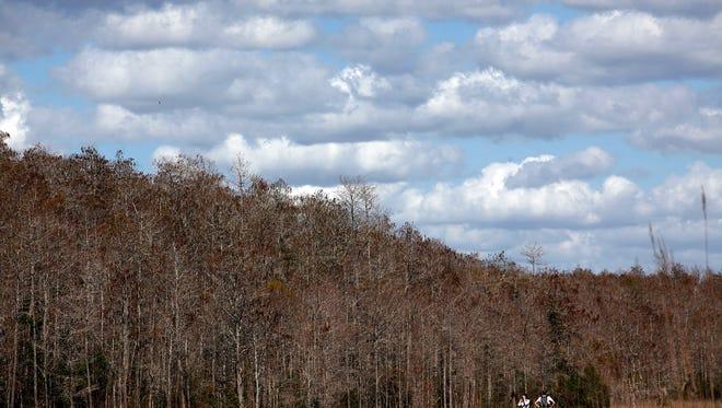 Corkscrew Swamp Sanctuary during World Wetlands Day on Sunday, Feb. 2, 2014.